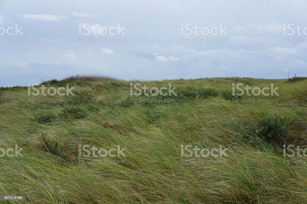 Texeler Dünen – Foto