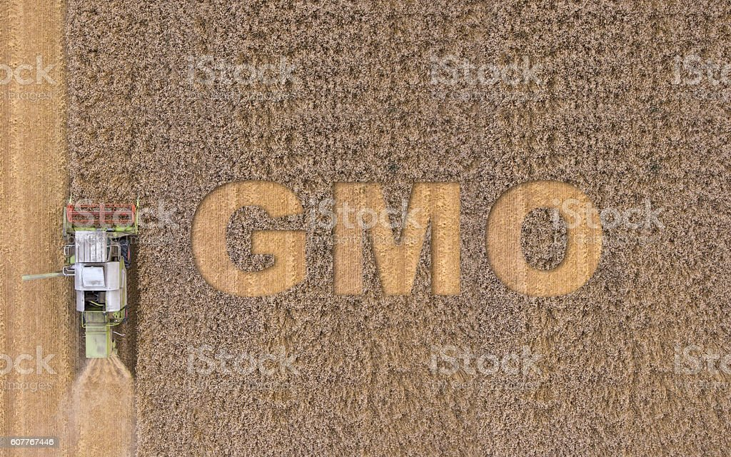 GMO text on field stock photo