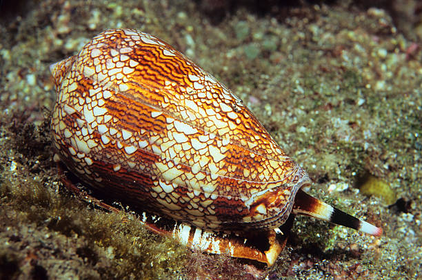 Textil Hütchen Shell – Foto