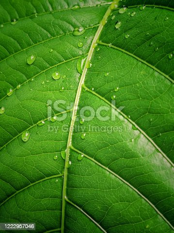Waterdrops on green leaves Stock photo