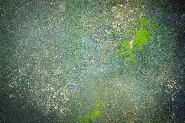 wzór i powierzchni moss rosnące na betonowej podłodze - wood texture zdjęcia i obrazy z banku zdjęć