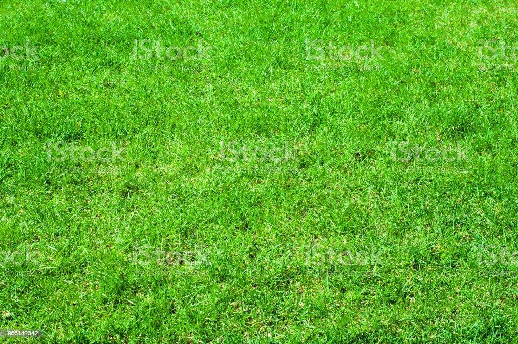 Textuur achtergrondafbeelding, lente landschap. Gras van het gazon na winter - Royalty-free Aruba Stockfoto
