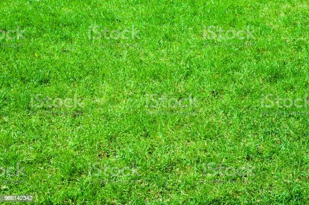 Texture Background Image Spring Landscape Lawn Grass After Winter Stock Photo - Download Image Now