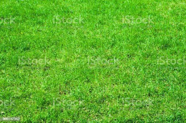 Textuur Achtergrondafbeelding Lente Landschap Gras Van Het Gazon Na Winter Stockfoto en meer beelden van Aruba