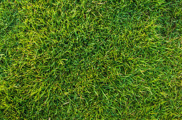 texture background of fresh green grass stock photo