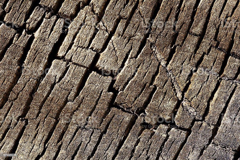 Texture background - tree cracked bark royalty-free stock photo