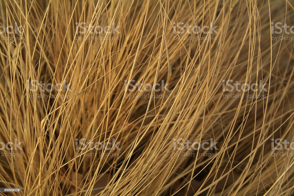 texture - blowing grass royalty-free stock photo