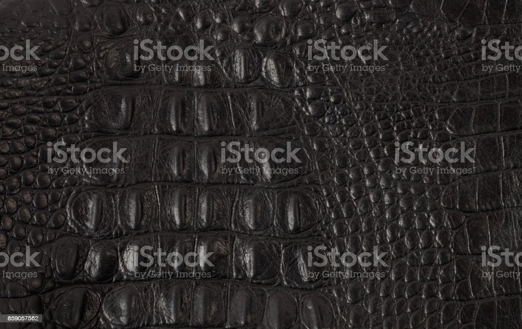 Texture crafted of black crocodile leather stock photo