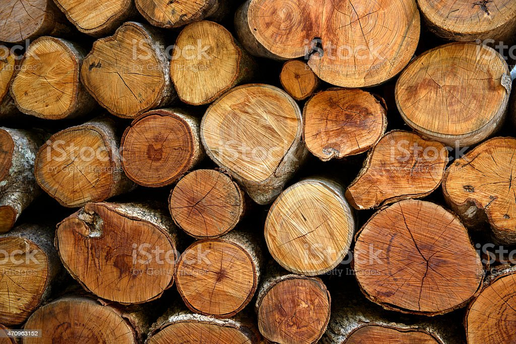 Texture cross section of  cutting wood is arranged stock photo
