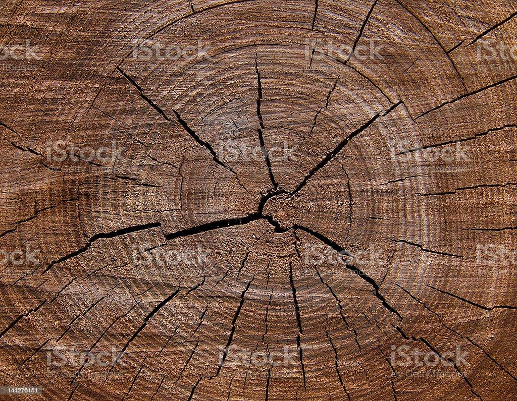 Texture  Cut  of Tree 2 royalty-free stock photo