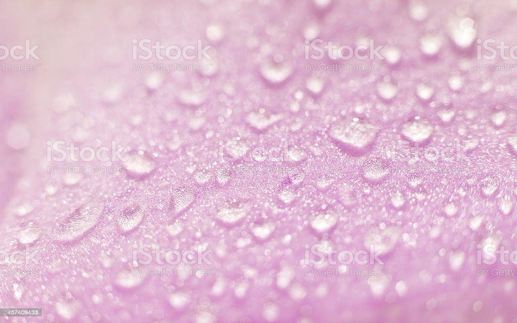 texture, dew drop stock photo