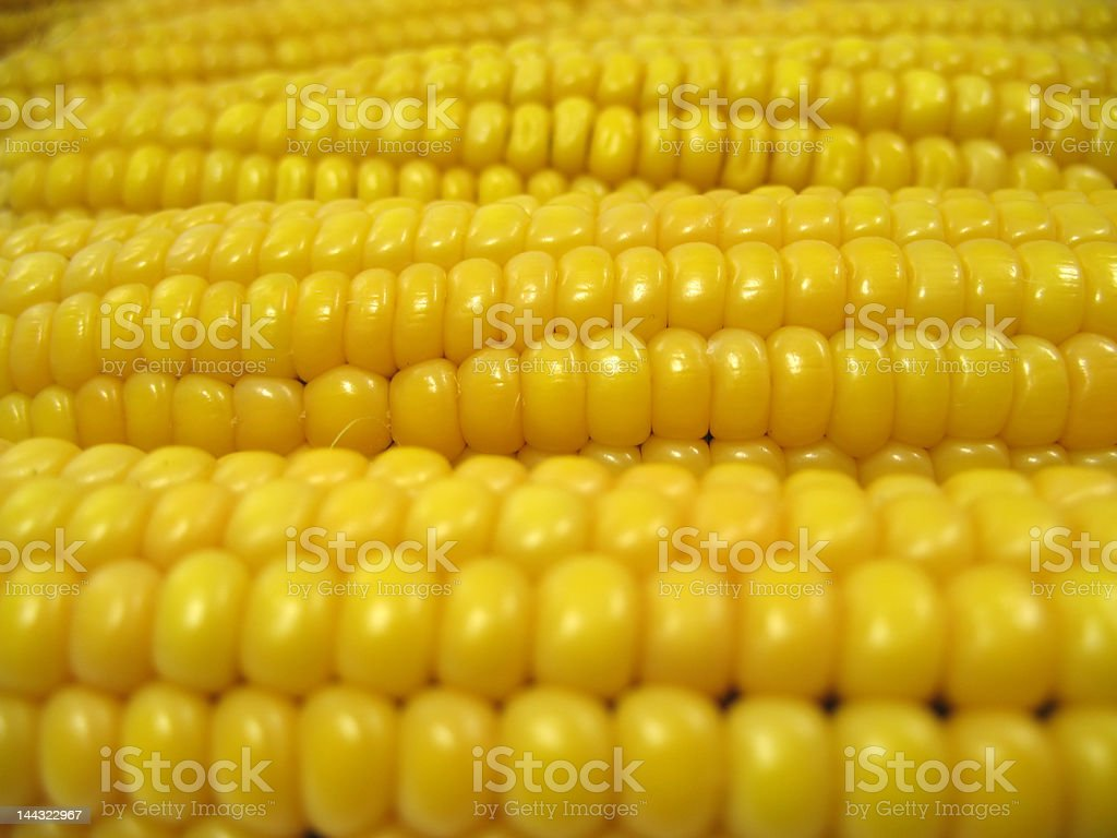 Texture ears of corn royalty-free stock photo