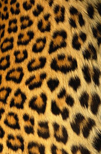 Texture fur leopardo