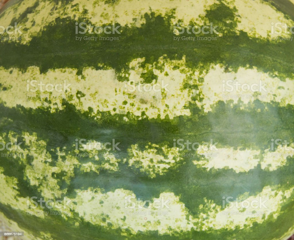 Texture green striped watermelon closeup background, healthy eating stock photo