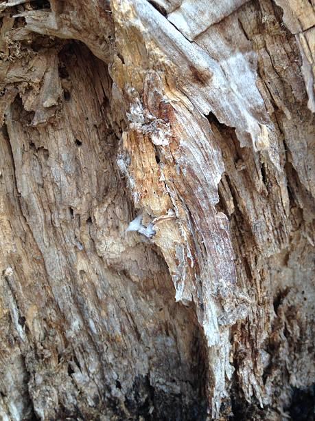 texture  inside of tree stock photo