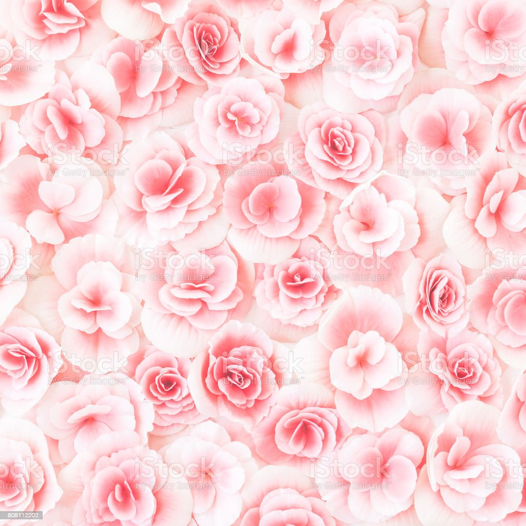 Flowers composition. Texture made of pink rose flowers. Flat lay, top...