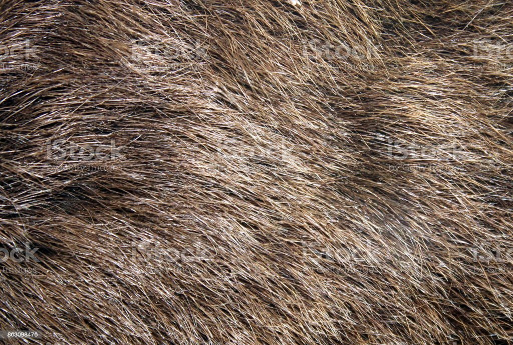 Texture of a brown bear's hair. stock photo