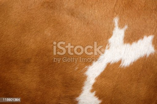 istock Texture of a Cow Coat 2 115901364
