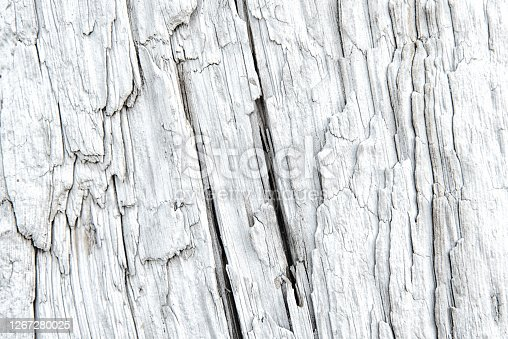 Texture of surface of a driftwood with deep longitudinal cracks