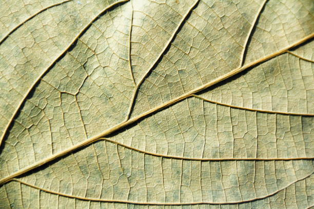 Texture of a dry leaf. stock photo