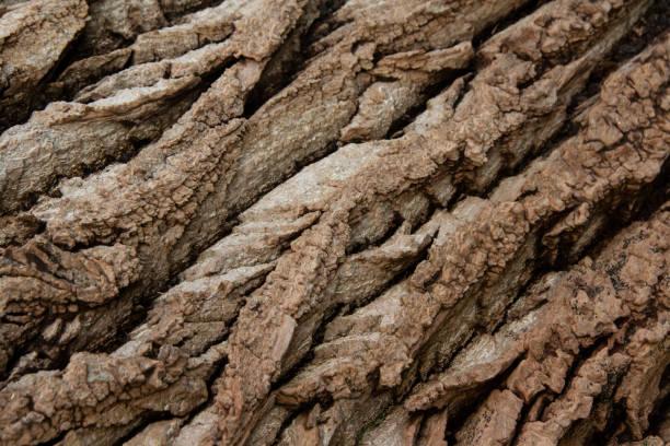 Texture of a Tree Bark close-up stock photo
