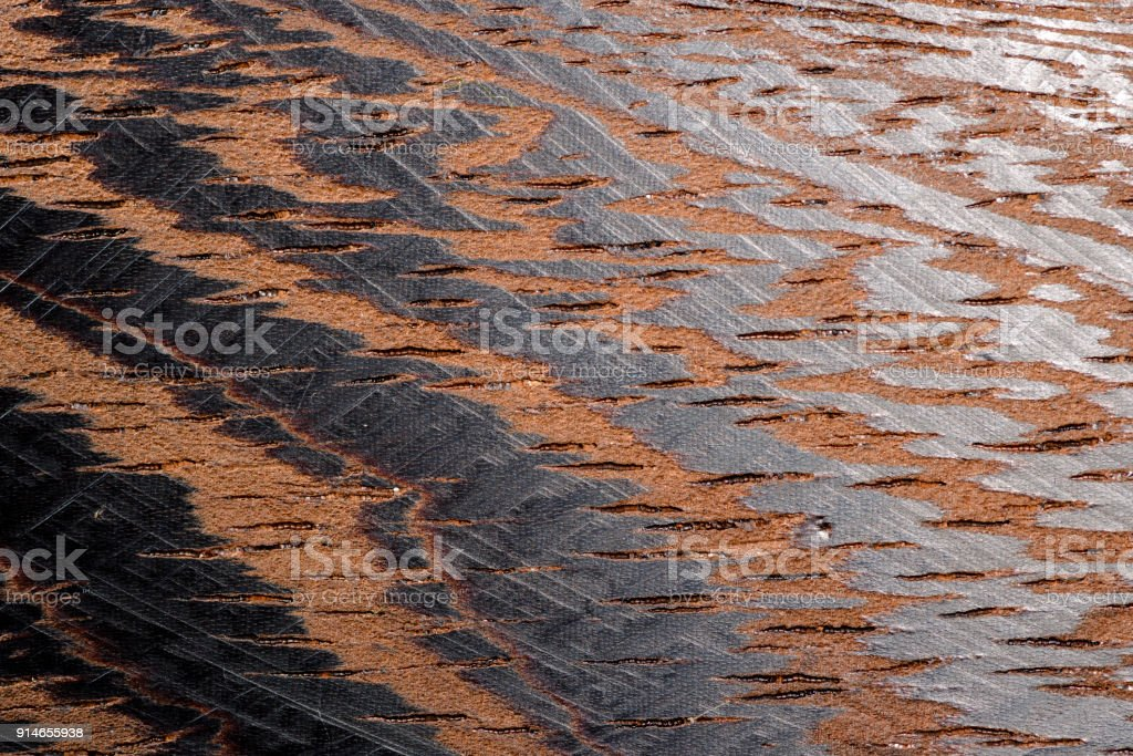 Texture of a wenge tree shot on a macro lens stock photo