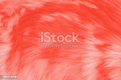 istock Texture of animal's fur in color of the year 2019 Living Coral 1082975408