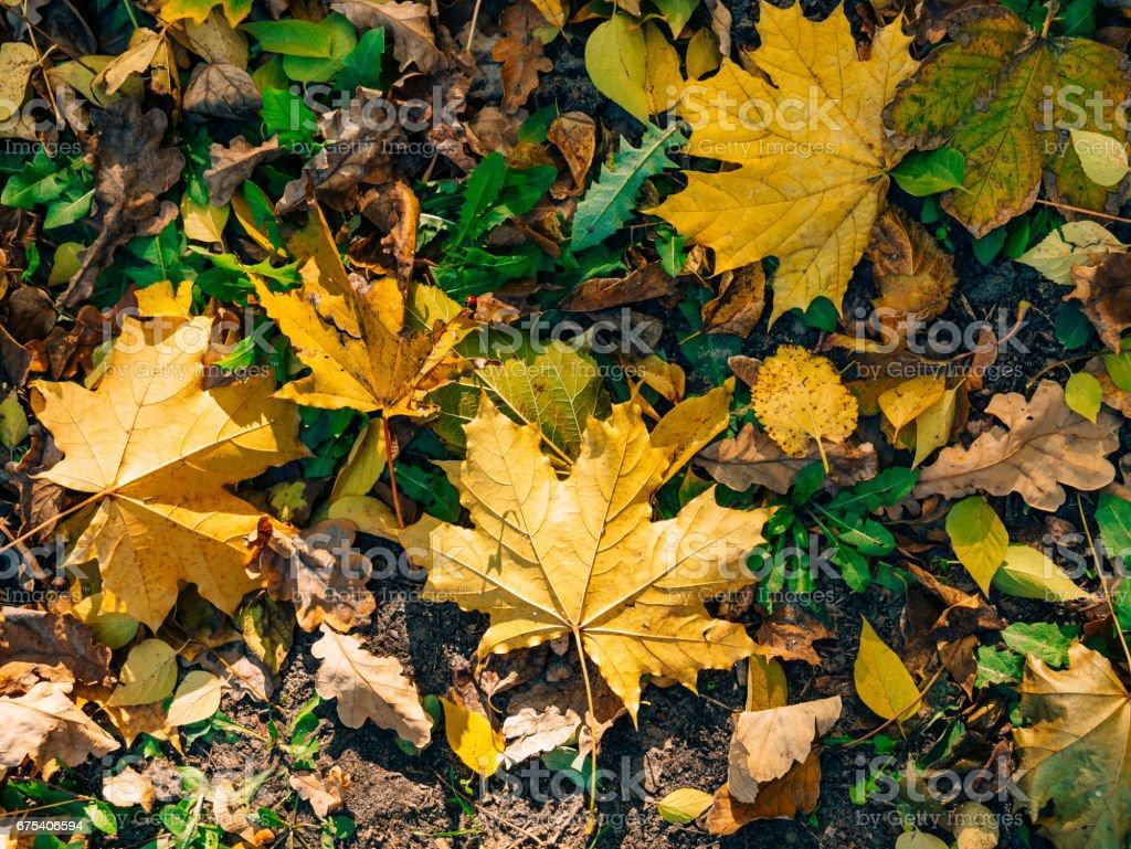 Texture of autumn leaves photo libre de droits