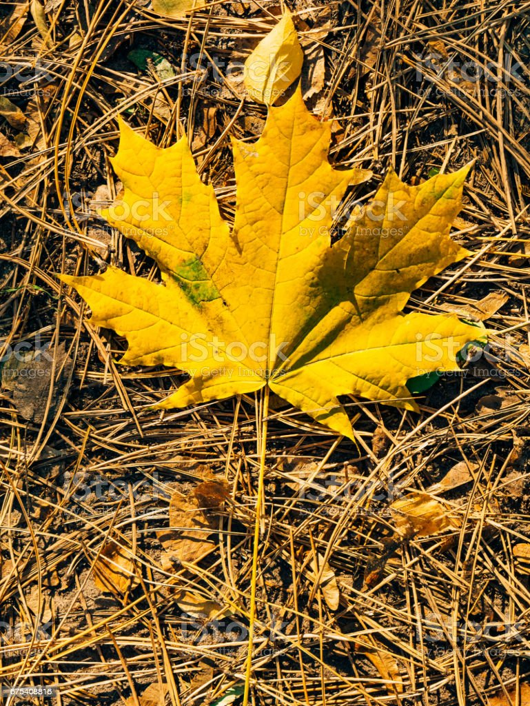 Texture of autumn leaves royalty-free stock photo