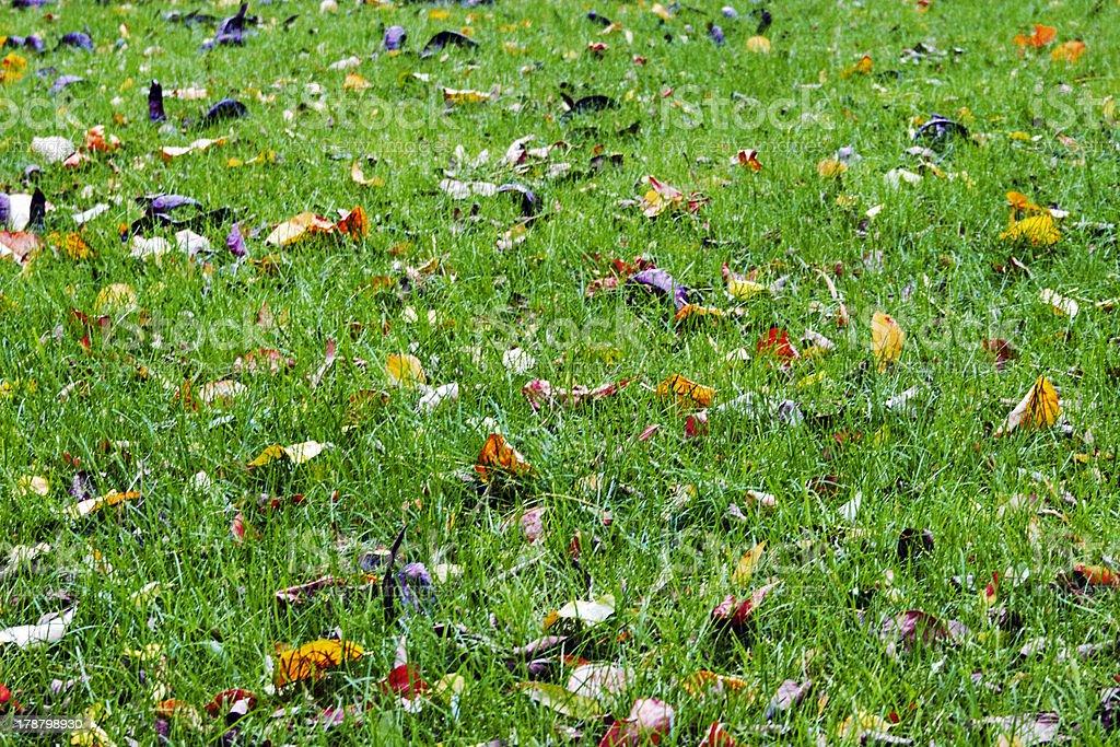 Texture of autumn royalty-free stock photo
