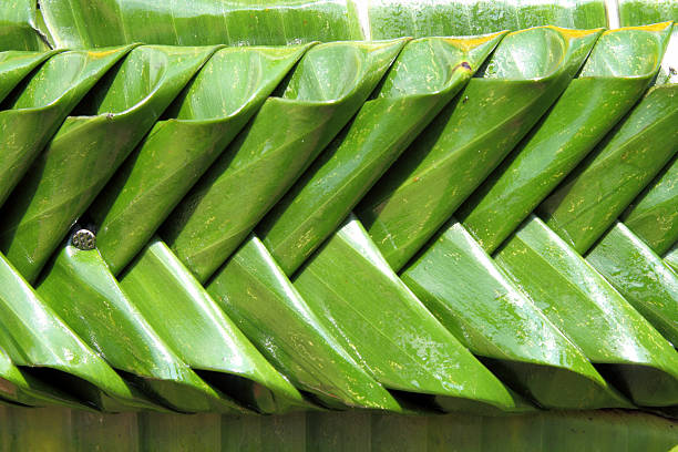 texture of banana leaf handmade in kratong festival, thailand - kratong stock photos and pictures