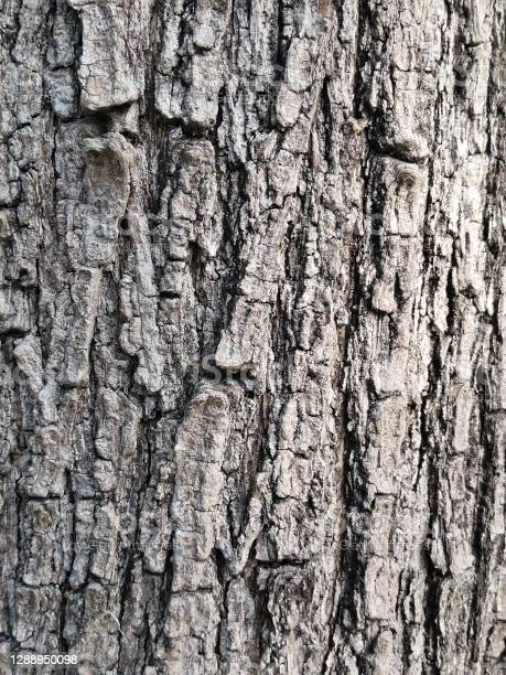 Photo of texture of bark