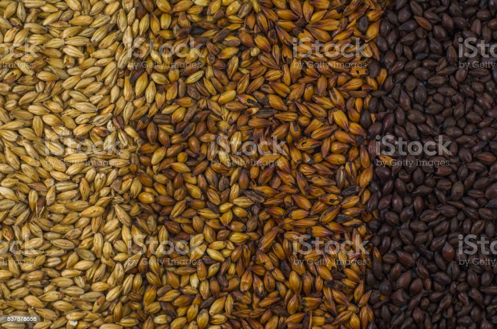Texture of barley stock photo