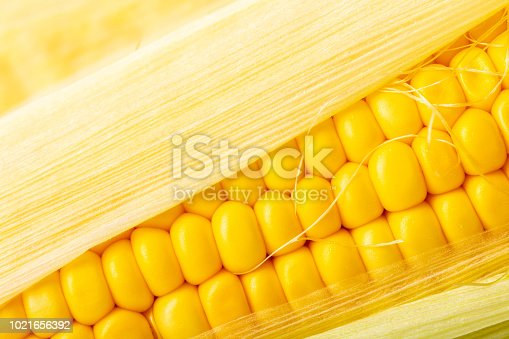 food background of a texture of corn cobs closeup