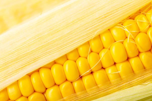 texture de gros épis de maïs - couleur des végétaux photos et images de collection