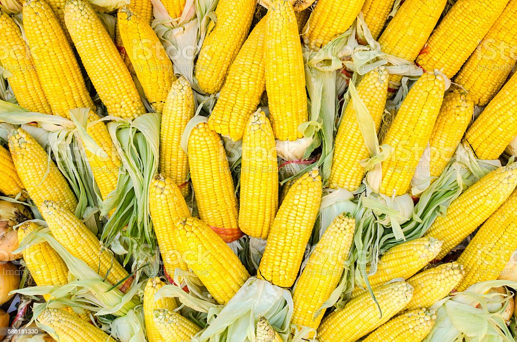 Texture of Dried corn background stock photo