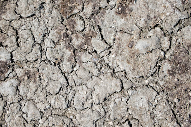 Texture of dry cracked earth with small seashells stock photo