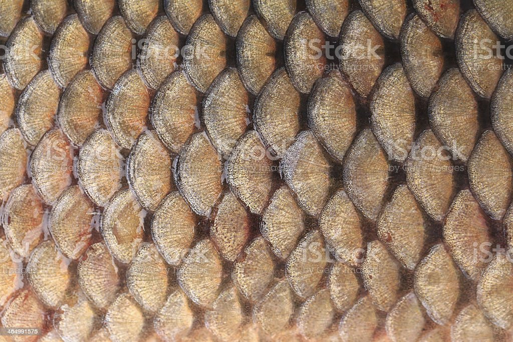 Texture of fish scales close up. stock photo