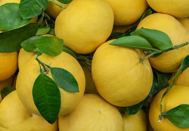 緑の葉を背景にした、新鮮な大きな黄色のグレープフルーツの食感 - グレープフルーツ ストックフォトと画像