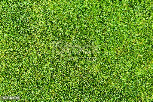 istock Texture of Green a Perfect Grass Lawn Background 507169146