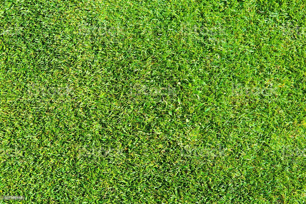 Texture of Green a Perfect Grass Lawn Background stock photo
