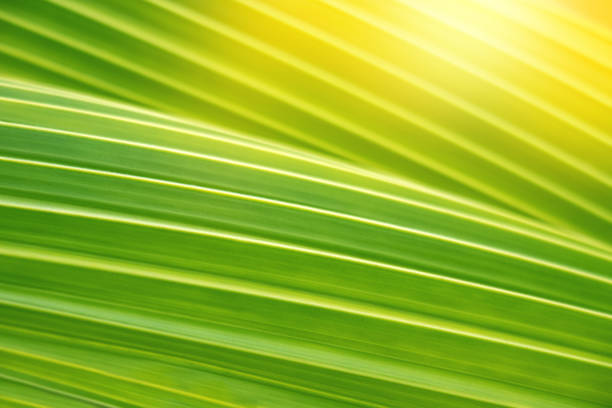 texture of green nature leaf in garden, closeup natural green plants background stock photo