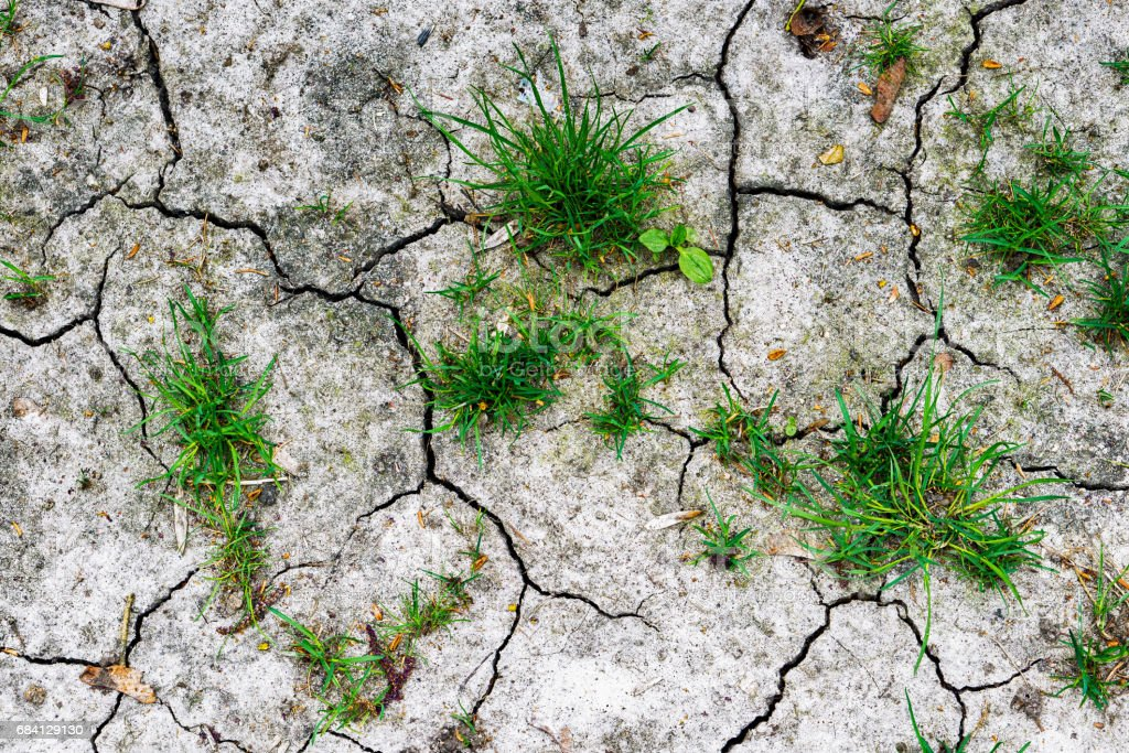 Texture of grey withered earth with cracks and green grass HDR effect photo libre de droits
