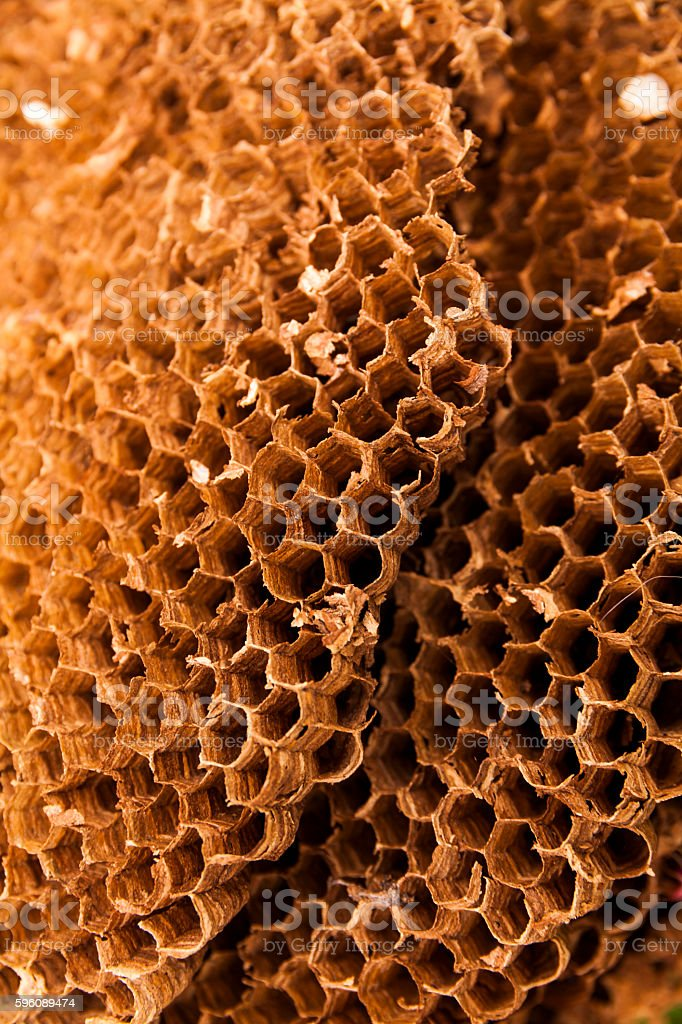 Texture of honeycomb. Natural abstract background. royalty-free stock photo