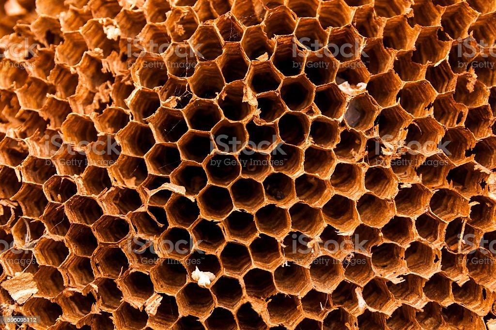 Texture of honeycomb. Natural abstract background. Lizenzfreies stock-foto