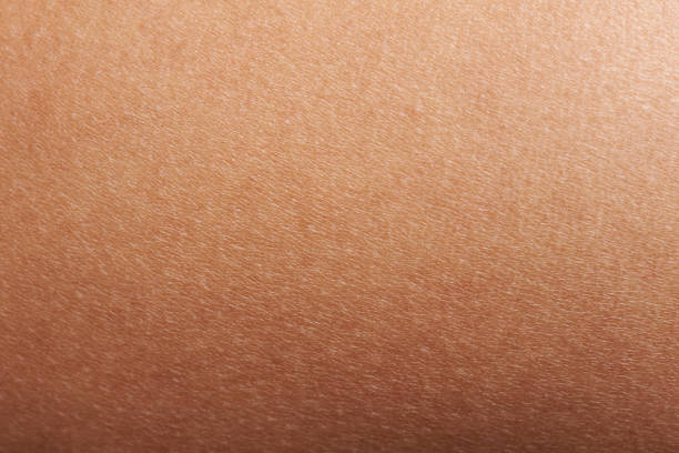 texture of human skin - human skin stock photos and pictures
