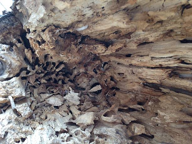 texture of inside tree stock photo
