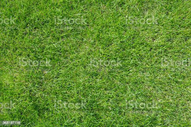 Texture of light green grass picture id968197116?b=1&k=6&m=968197116&s=612x612&h=he9mcq2jfwq7iel7jvdud8vvwzbcx3jgv6na yqmy u=
