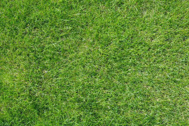 texture of light green grass. - grass stock pictures, royalty-free photos & images