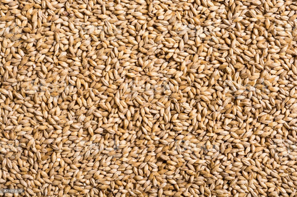 Texture of malt pilsner stock photo